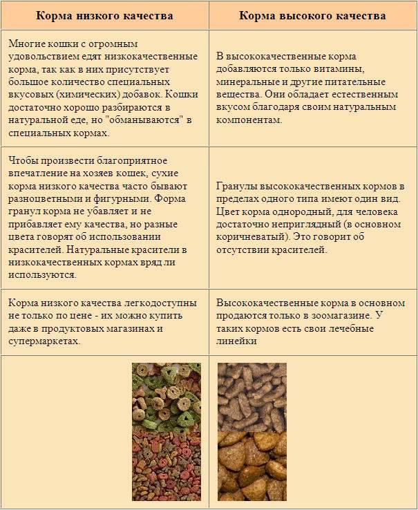 Чем кормить кастрированного кота: особенности рациона и выбора корма
