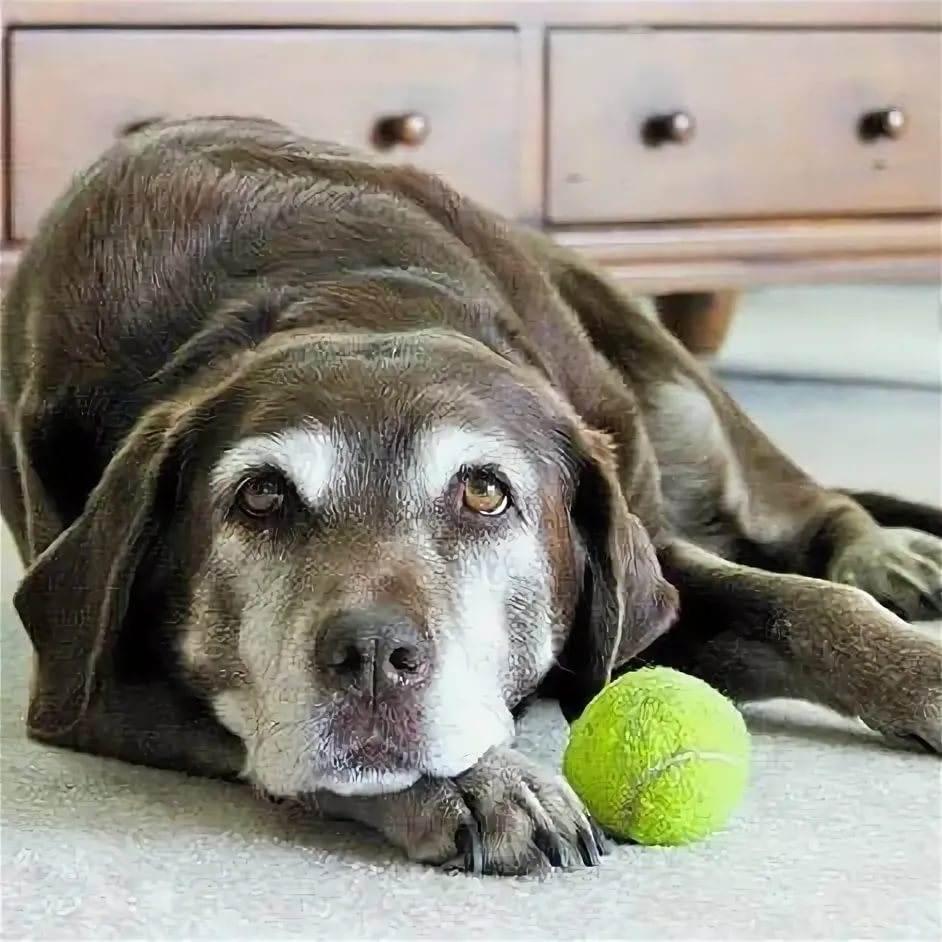 Корм для стерилизованных собак
