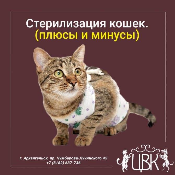 Кастрация кота - цена в москве, сколько стоит касртировать кота | ветклиника зоостатус