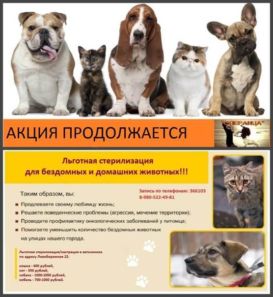 Стерилизация собак: подготовка к операции, уход после, плюсы и минусы
