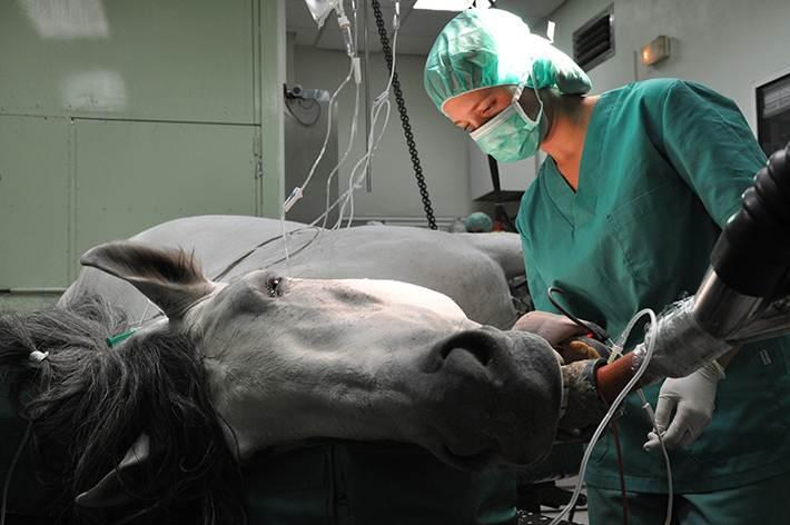 """Лапароскопическая стерилизация кошек и собак -  стерилизация лапароскопическим методом в москве. ветеринарная клиника """"зоостатус"""""""