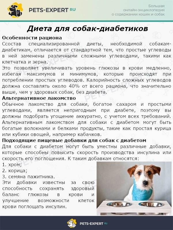 Корма для стерилизованных собак — топ лучших 2021