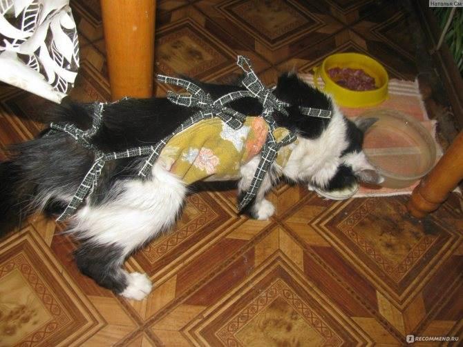 Советы по уходу за кошкой после стерилизации - wlcat.ru