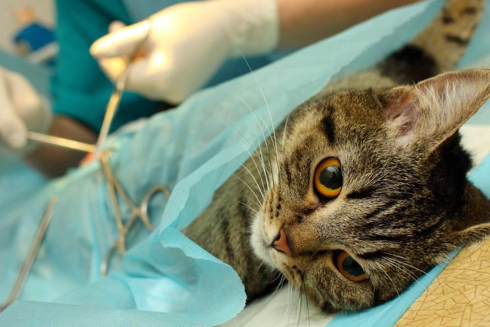Кастрация собак и кошек - плюсы и минусы операции | ветклиника зоостатус