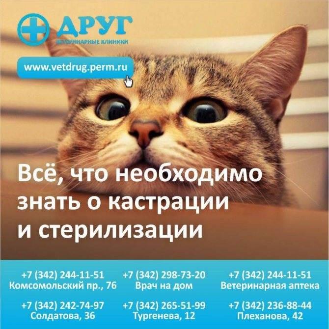 Стерилизация кошек - все плюсы и минусы