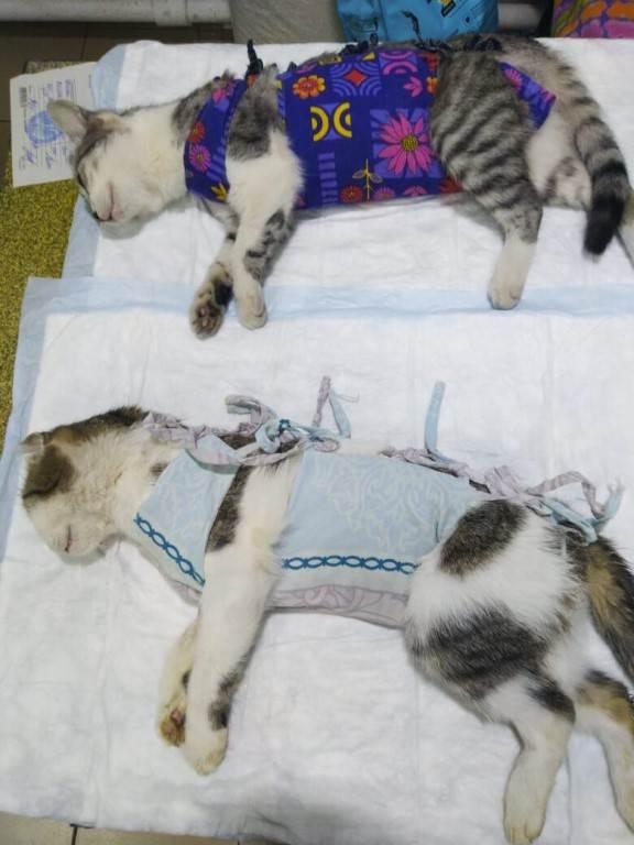 Нужно ли кастрировать кота: плюсы и минусы процедуры