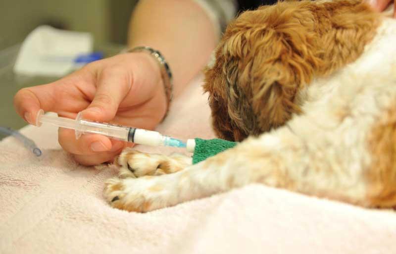 Применение ингаляционной анестезии у животных | ветеринарная клиника амикус