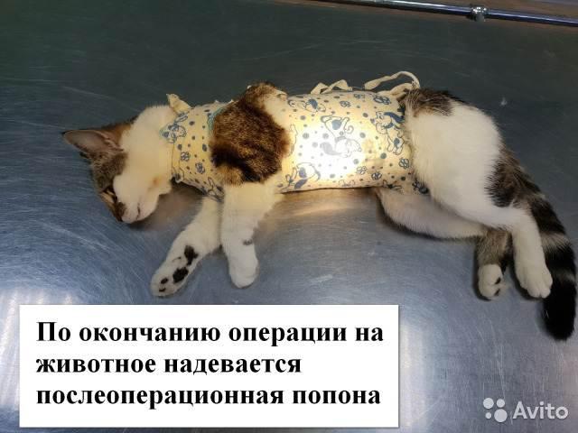Послеоперационный уход за животным