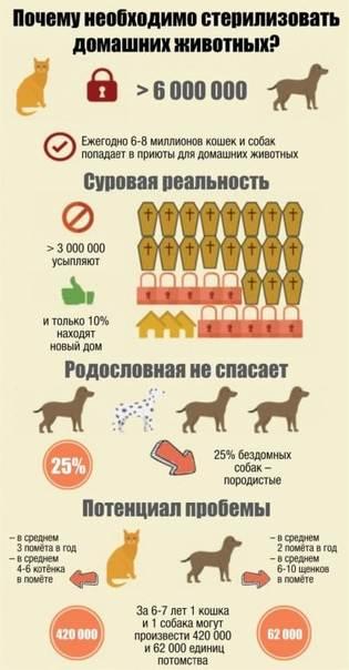 В каком возрасте стерилизуют собак?