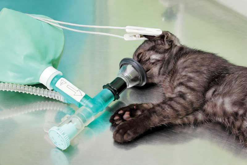 Газовый наркоз для животных - ингаляционная анестезия -