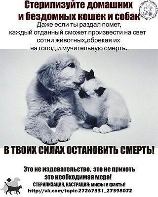 Обзор современных способы стерилизации и кастрации кошек и собак
