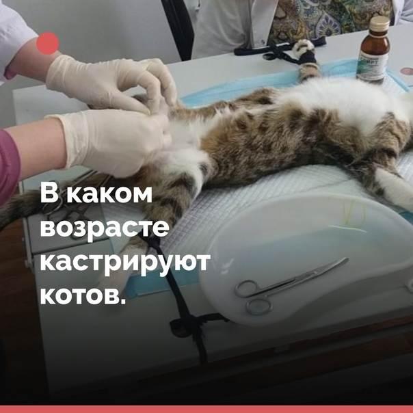 Нужно ли кастрировать кота