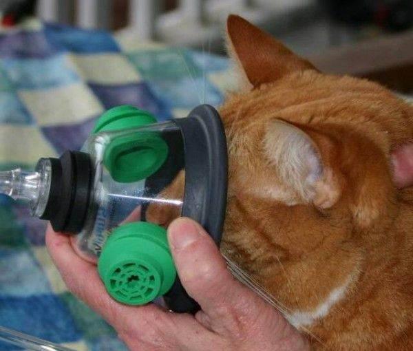 Наркоз для животных