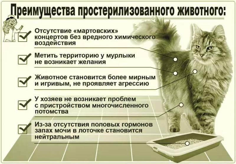 Кастрация кота — зачем она нужна и как она делается?