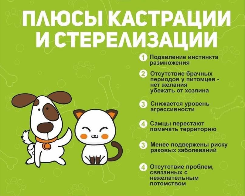 Стерилизация собаки – особенности, виды и нюансы процедуры