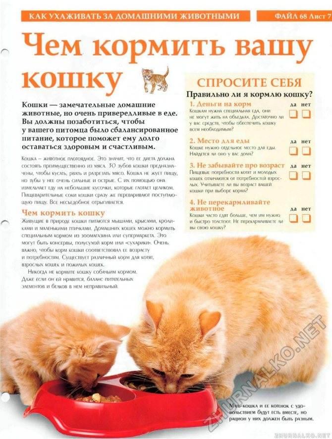 Как кормить кастрированного кота: сколько раз в день, как и чем нужно кормить