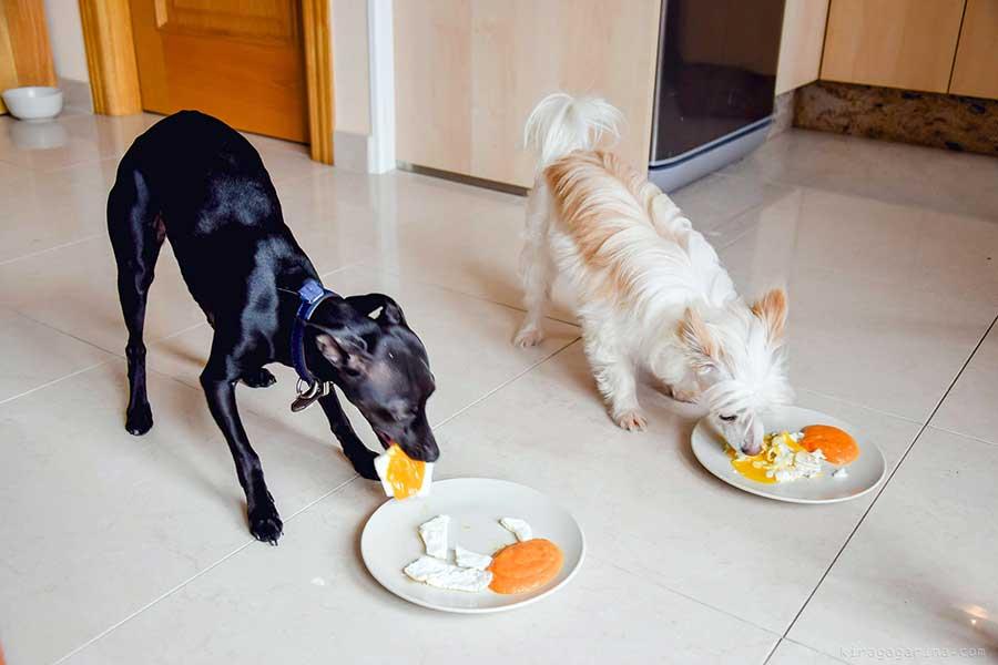 Чем кормить собаку после стерилизации: «натуралка», сухой и влажный корм