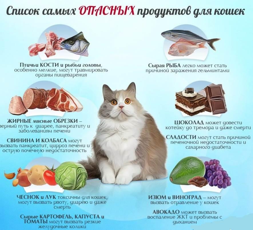 Как и чем кормить кастрированного кота: необходимость пересмотра рациона, рекомендации по сухому и натуральному кормлению кастрированного кота, профилактика ожирения и мочекаменной болезни