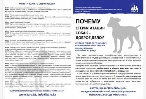 Плюсы и минусы стерилизации собаки: какие возможны последствия, с какой целью проводится операция