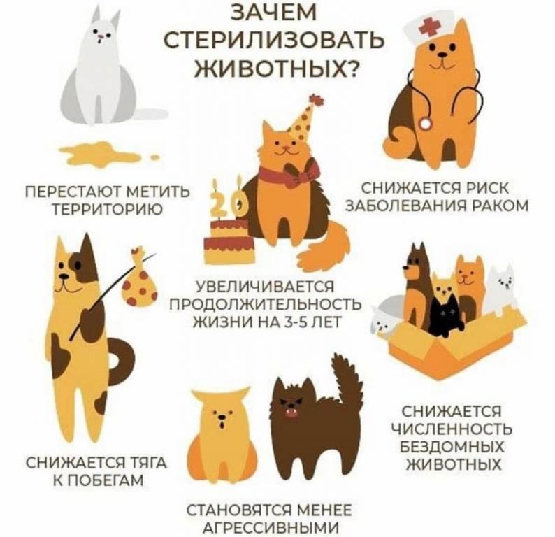 Нужно ли стерилизовать собак?
